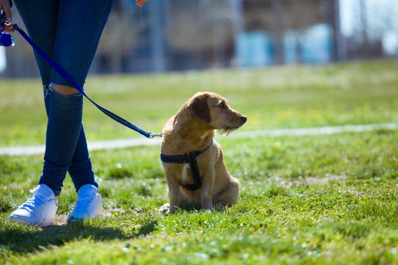 Espaço pet em condomínios: Por que investir em um ambiente exclusivo para animais de estimação
