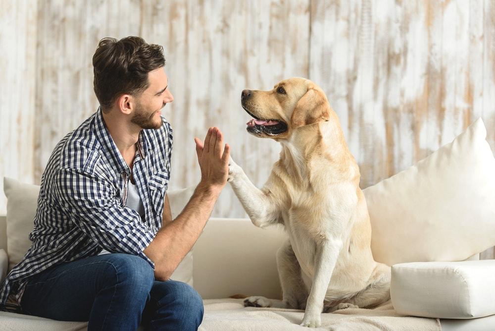 Animais em condomínios: como o síndico pode amenizar conflitos